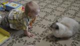 Curiosity Meets the Cat
