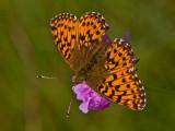 Butterfly_2635.jpg