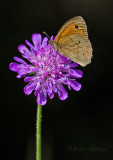 Butterfly_2311.jpg