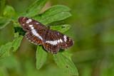 Butterfly_2922.jpg