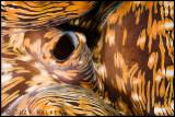 70s giant clam