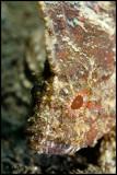 leaf fish face