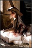 Fish stick, Rialto Market