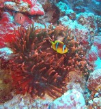 30m down and glowing red, Sharm 2005