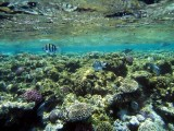Reef by the surface, Sharm 2005