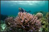w/a Staghorn coral & Martin Edge