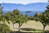 Lake Side Orchard