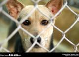 ¤½¥ß¦¬®e©Ò/Public animal shelter in Taiwan