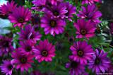 D50-2008-04-27_026.jpg
