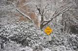 Winter in Alton Baker Park