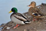 Birds at Delta Ponds
