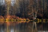 Alton Baker Pond