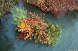 River bank color