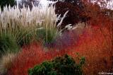 Colors in Alton Baker Park