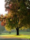 Alton Baker Park - 120505