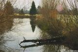 One of Alton Baker ponds