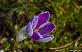 D50-2008-03-04_010.jpg