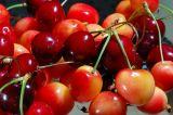 Bing cherries and rainier cherries