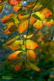 Red & Yellow Leaves