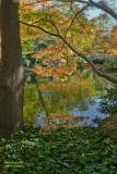 Leaves & Pond