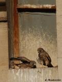 Ils ne sont toujours pas décidés à quitter le nid !