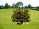 Into the Chalke Valley: 2006 [13]