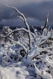 09-02 Snow 06.JPG