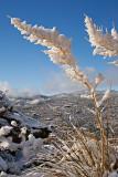 Prescott Winter