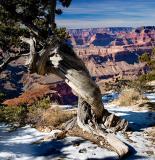 06-01 Grand Canyon 01.jpg