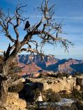 06-01 Grand Canyon 05.jpg