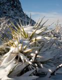 06-03 Prescott Snow 13.jpg