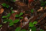 Analamazaotra Reserve Andasibe 3.I.2005 1.JPG