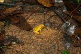 Madagascar est Andasibe Analamazaotra reserve 3.I.2006 1.JPG