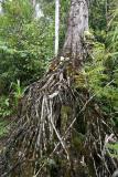 Madagascar Est Andasibe Vohimama forest 5.I.2006 1.JPG