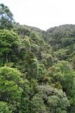 Madagascar Est Andasibe Vohimama forest 5.I.2006 2.JPG