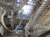 comparing structures of whales and the building