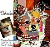 chihuaua