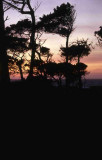 Monterey Sunsets