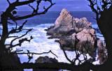 Pt. Lobos, Monterey  Bay Area, California