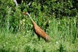 Seney National Wildlife Reserve