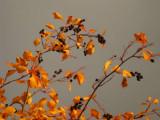 Fall Garden8.jpg