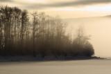 Francois Fog2.jpg