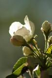 Spring Blossoms2.jpg