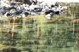 River Reflections2.jpg