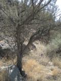 DesertFlora.jpg