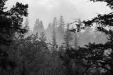 Forest Cooling_.jpg