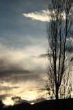 Evening Light2.jpg