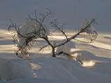 Snow Tree2.jpg
