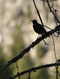 Bird Silhouette2.jpg