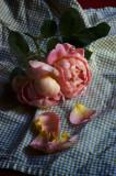 les roses du jour